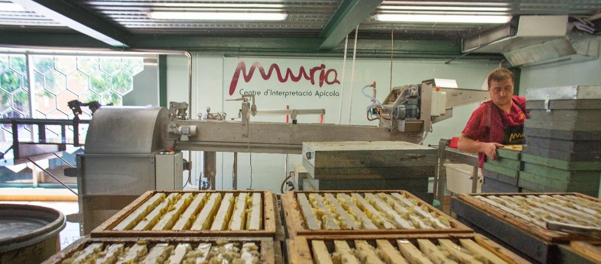 Visit to Muria: Beekeeping Interpretation Center