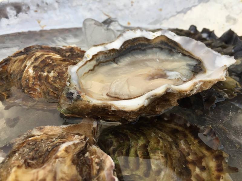 Visita i degustacio a Musclarium amb taxi maritim (musclos i ostres) i detall
