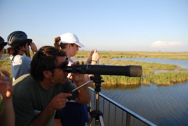 Tour panoramique du delta de l'Èbre en van avec Natura & Aventura